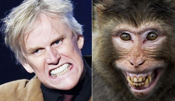 lookgal-animal-look-alikes-gary-busey