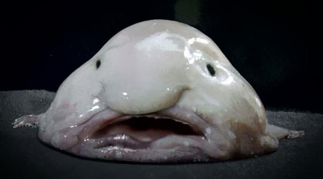 biztheblobfish